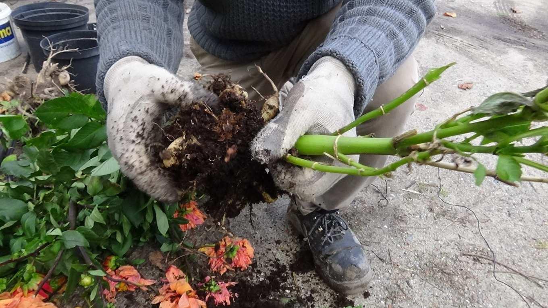 Sadzenie i przesadzanie drzew i krzewów