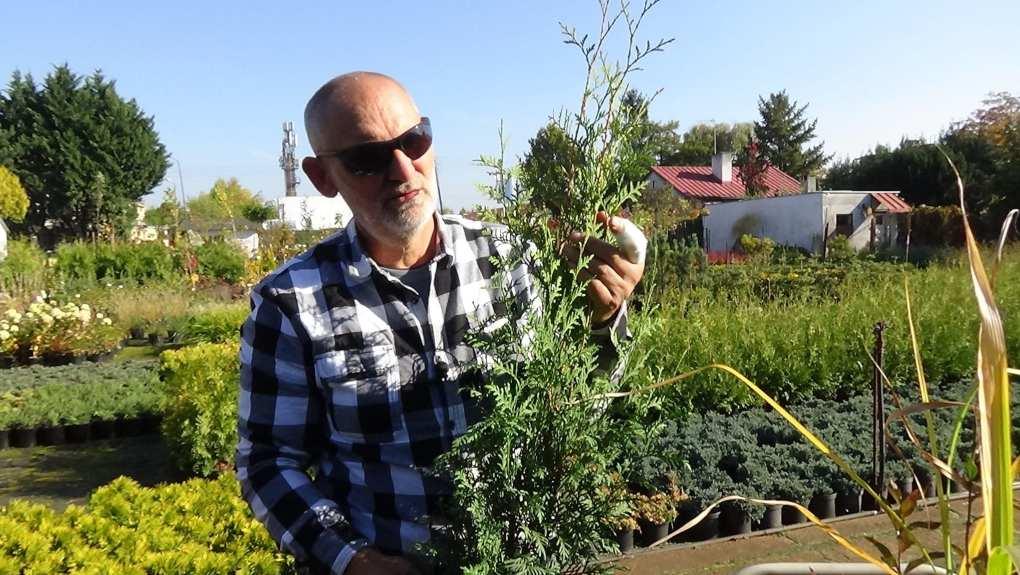 DSC02810 Te rośliny nadają się na żywopłoty