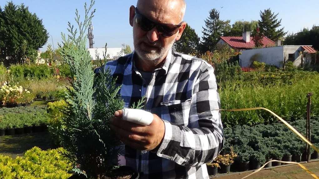 DSC02812 Te rośliny nadają się nażywopłoty