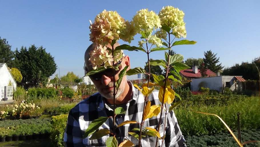 DSC02817 Te rośliny nadają się nażywopłoty