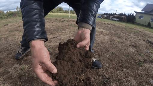 IMG_3306-300x169 Pędraki w trawniku. Jak się ich pozbyć?