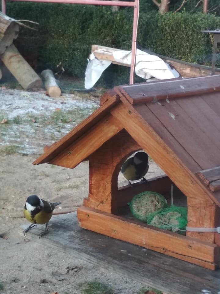 47054599_2009289335798225_281144985783369728_n Jak prawidłowo dokarmiać ptaki zimą