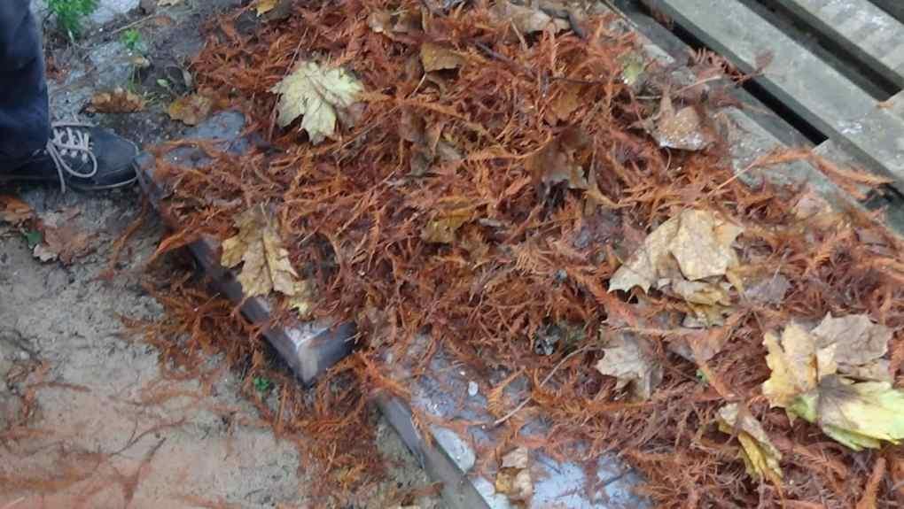 DSC03229 Jak zabezpieczyć rośliny na zimę?