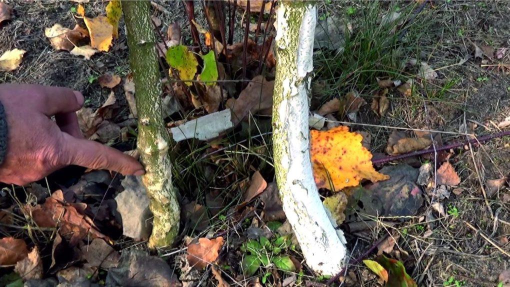 2-stadium Dlaczego moje drzewa nie rosną?
