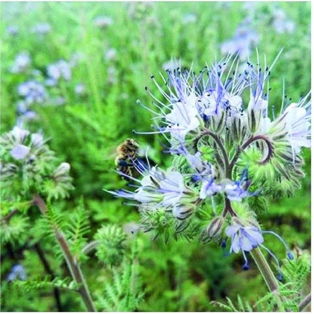 pszczola-1024x1024 Miód zekologicznej pasieki