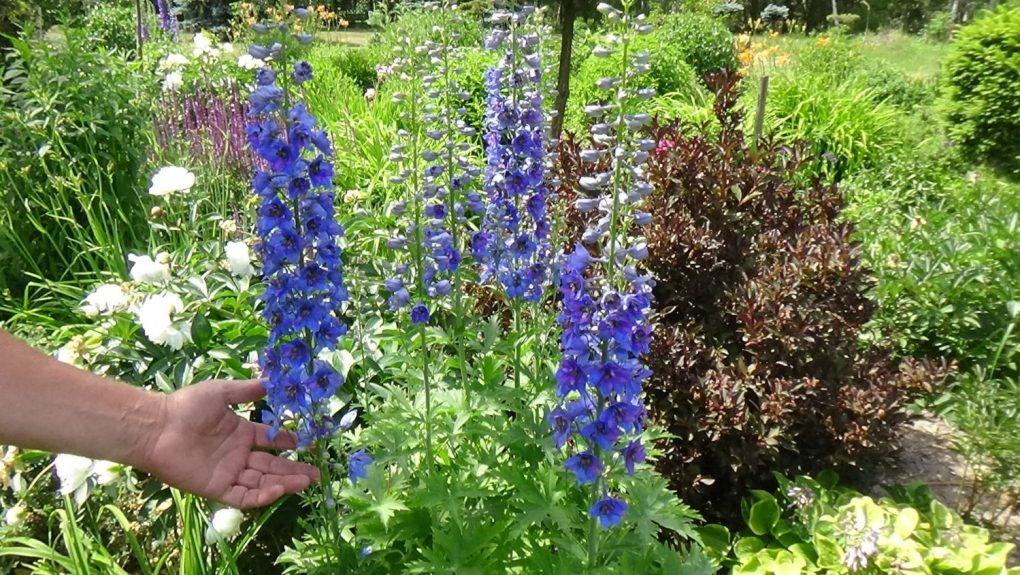 DSC01724-1024x577 Jak zaplanować ogród