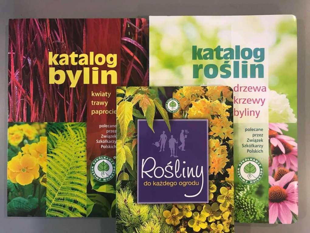 katalogi-1024x768 Jak zaplanować ogród