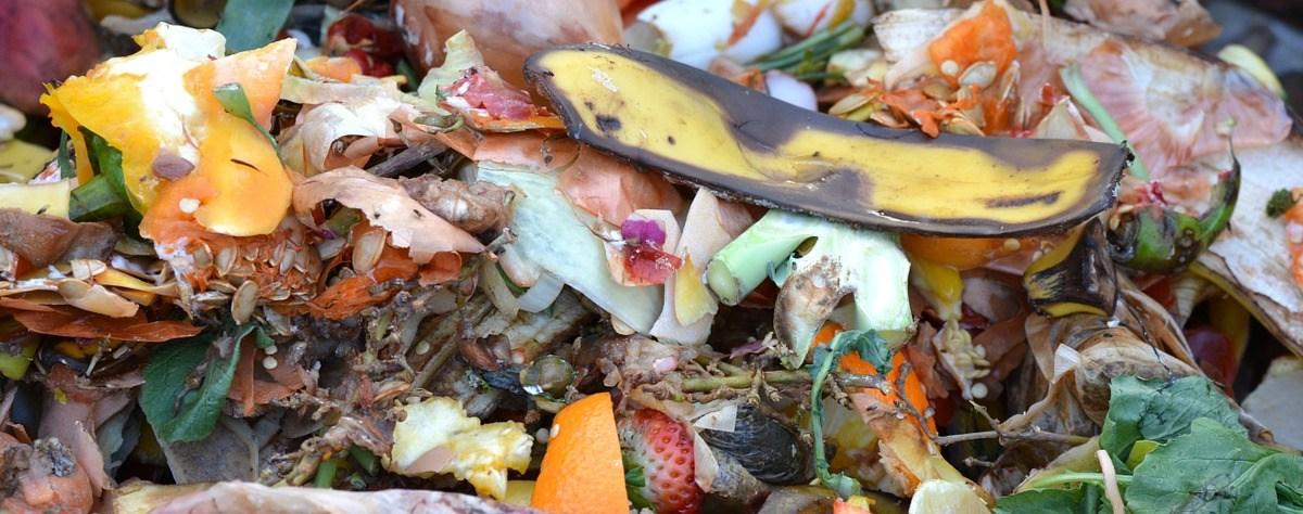 Kompost możemy sobie stworzyć sami!