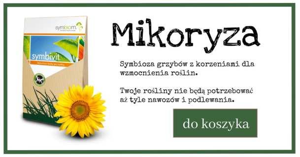 mikoryza_reklama-1024x538 Jak radzić sobie z suszą - Zielone Porady 37