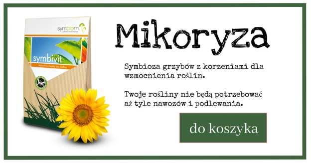 mikoryza_reklama-1024x538 Szkodniki i choroby drzew i krzewów na terenach miejskich