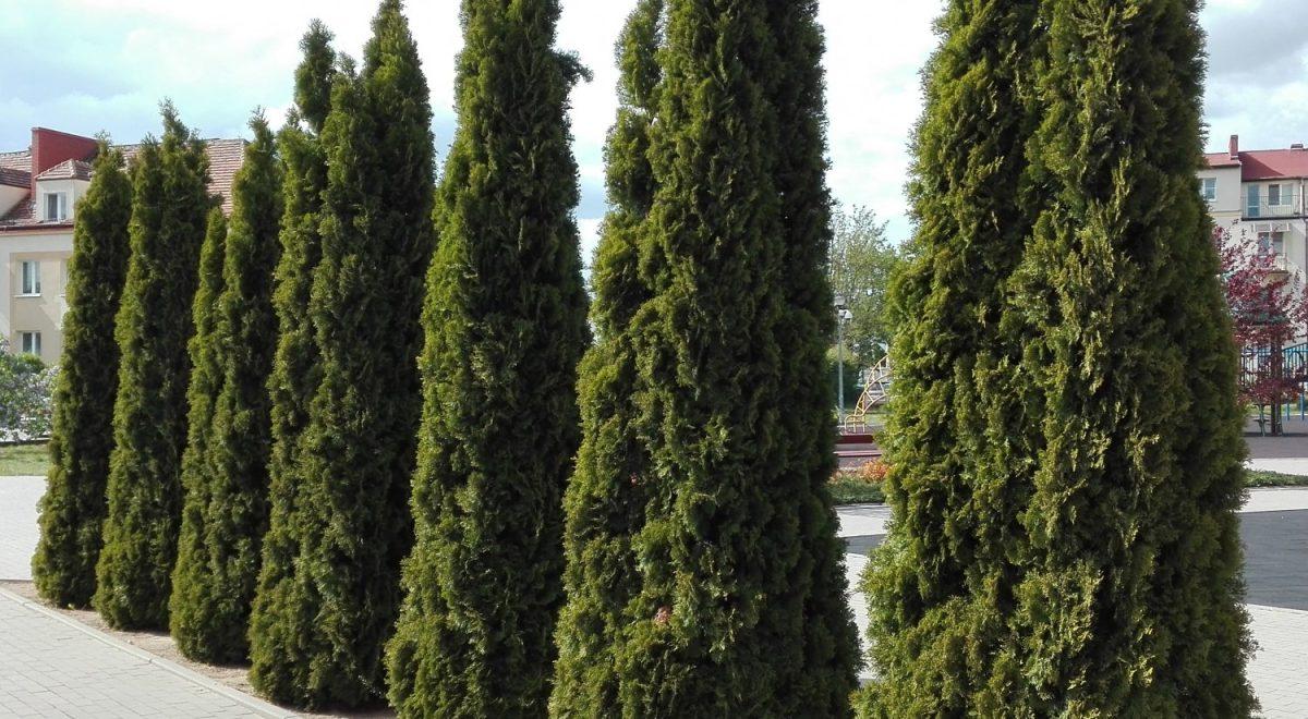 Cięcie drzew. Kalendarz cieć. Zielone Pogotowie