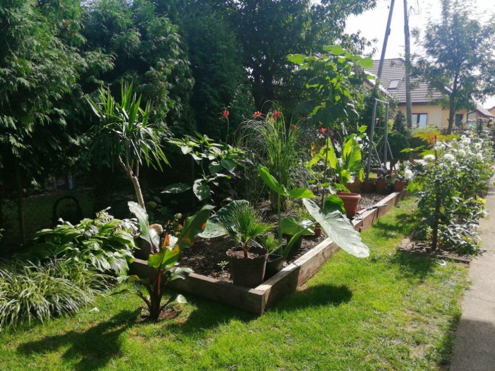 rabata-egzotyczna-1024x768 CzywPolsce da się uprawiać rośliny egzotyczne?