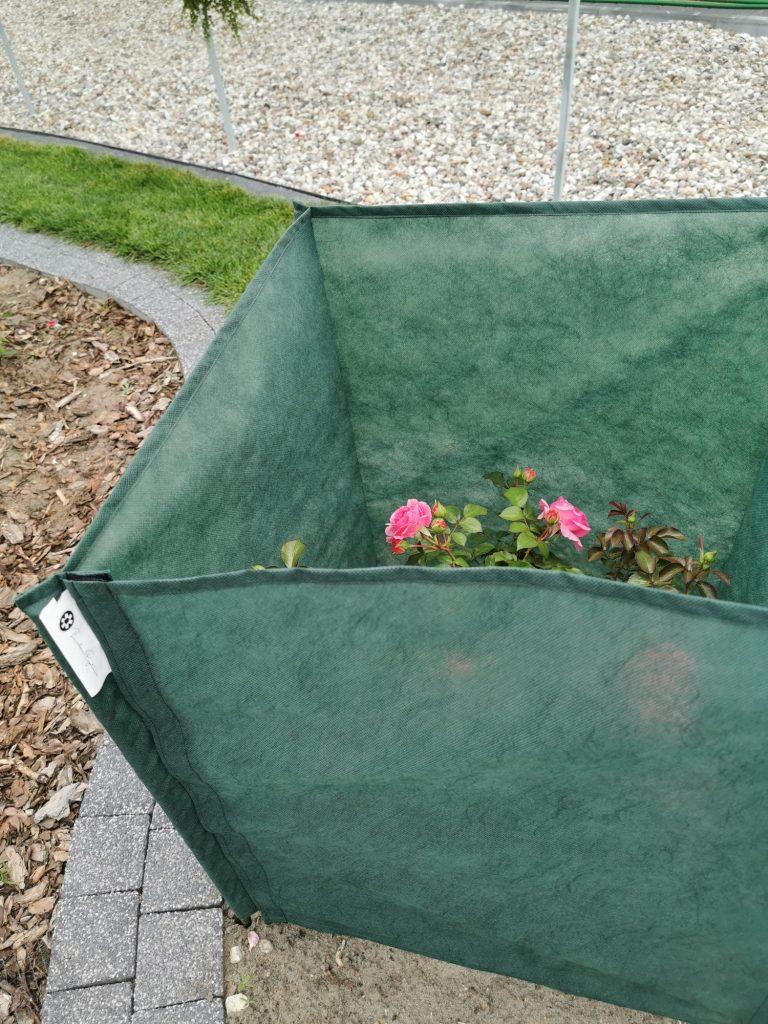 parawan_2-768x1024 Róże - pielęgnacja, choroby, niezawodne odmiany. Zielone Porady 20
