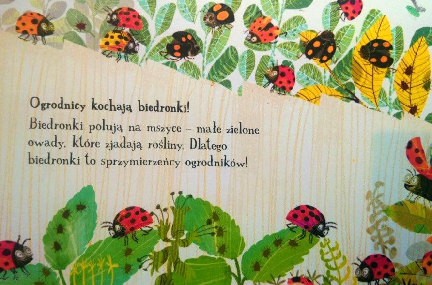 """ogrodnicy-kochaja-biedronki """"Szkodniki"""", które nie szkodzą"""