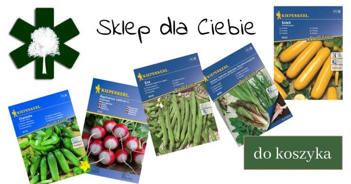 Kopia-projektu-Biggest-Sale-1-1024x538 Dobre i złe sąsiedztwo w ogrodzie warzywnym. Zielone Porady 6