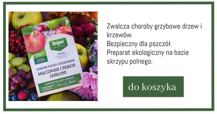Copy-of-Kopia-projektu-Kopia-projektu-Biggest-Sale-1024x538 Te zabiegi uchronią Twoje rośliny przed chorobami i szkodnikami