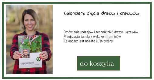 kalendarz-cięcia-1024x538 Cięcie zagęszczające drzewek ozdobnych - Zielone Porady 50