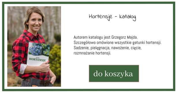 katalog-hortensje-1-1024x538 Miłośnicy krzewów pomagają dzieciom