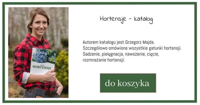 katalog-hortensje-1-1024x538 Wrzosy - gdzie i jak je sadzić?