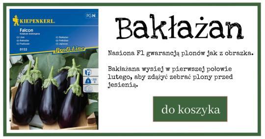baklazan-1024x538 Bakłażana wysiej u siebie