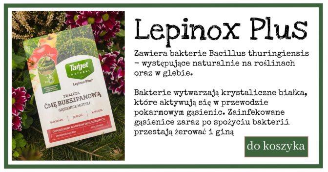 lepinox-1024x538 Kiedy wykonać oprysk na ćmę bukszpanową?