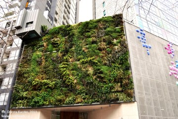 green_walls_zielone_sciany_ogrody_werykalne_architektura_krajobrazu_krakow_zielen_w_mieszkaniu2