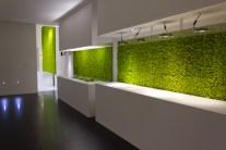 zielone ściany z mchu w kuchni