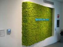 zielone ściany z mchu w biurze