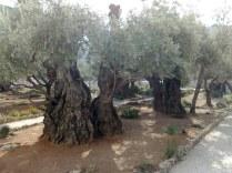 Ogród Getsemani