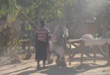 Concern Over Teen Pregnancies In Domboshava