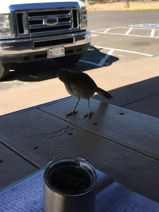 a resident Roadrunner sat with me for awhile.