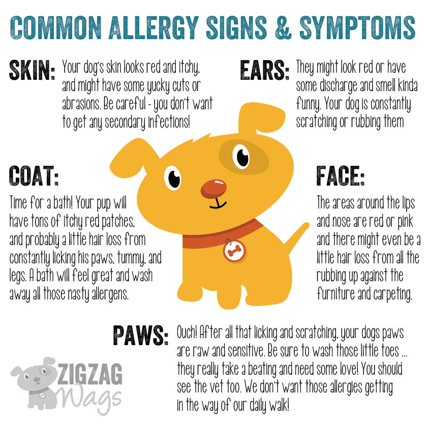 Skin Disease Due To Food Allergies in Dogs | Homeopathy For Dogs ...