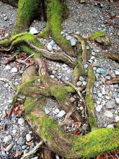 16-12-25-lake-roots-z