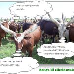 Lembu tanduk besar, affrican cattle!