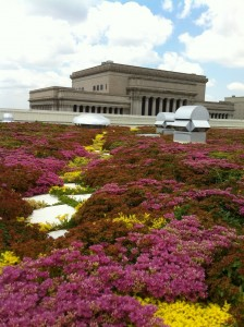 Green-Roof-in-bloom-224x300