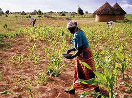 The Implications of another Regional Crop Failure