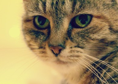 My fur-baby. Fifteen years old and so embedded in my life. Photo: Su Leslie, 2014.