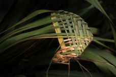 Art in nature. Seen beside a bush track; woven harakeke (NZ flax) stems. Image: Su Leslie, 2017