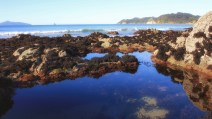 Rockpool, Langs Beach, Northland, NZ. Image: Su Leslie, 2017