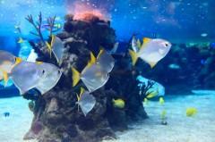 Aquarium gegen Zimmerbrunnen