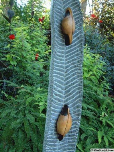 Dried Seed Pod