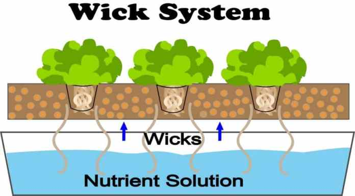 The Wick System in Hydroponics