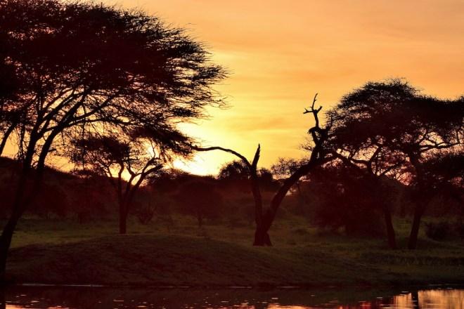 Sunshine Blogger Award - Bilder - Sonnenuntergang - Tarangire NP - Tansania