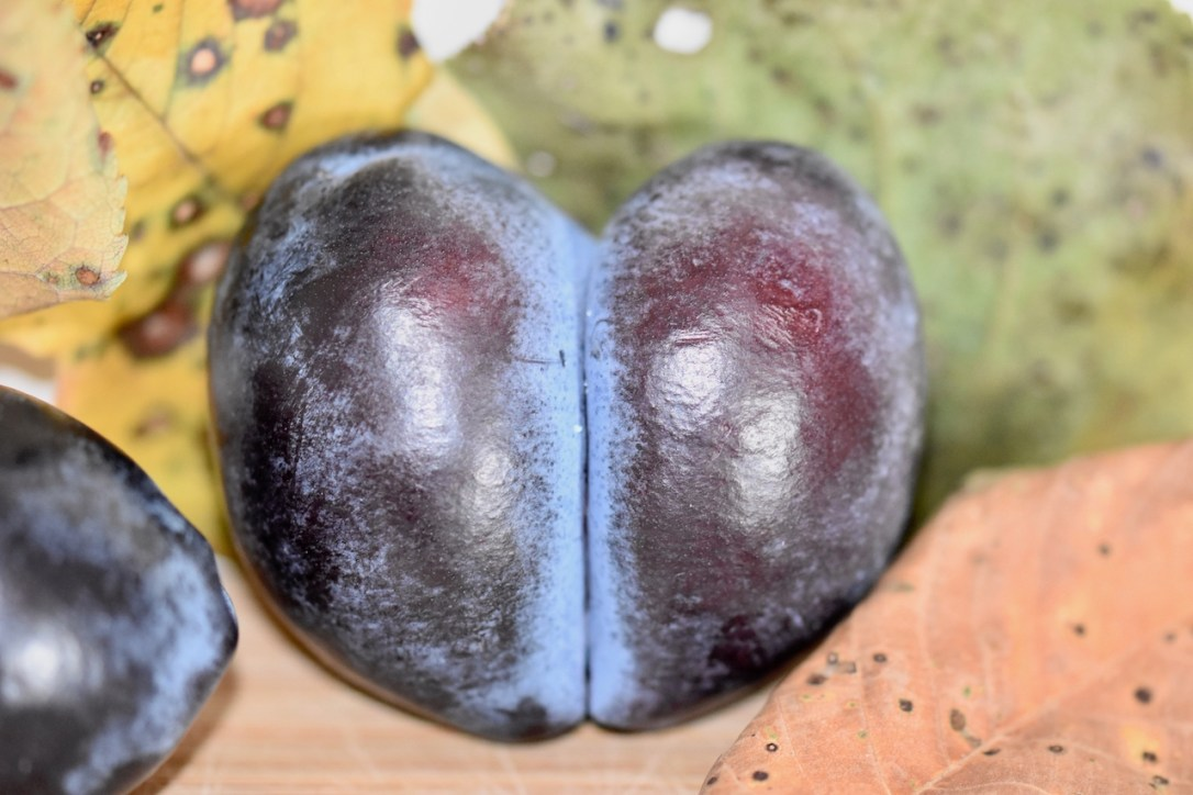 Pflaume in Herzform. Im Hintergrund sind verfärbte Blätter zu sehen.