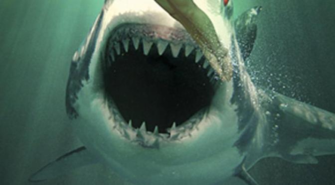 """""""Tiburón Fantasma"""" (2013)… El temible gusyluz con dientes"""