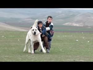 Fotograma Sivas