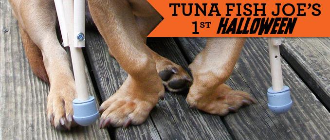 Tuna's Tiny Crutches | Dog Halloween Costume