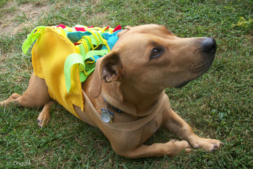 Casual Canine Taco Costume - Multiple Sizes |Taco Dog Halloween Costume Pattern