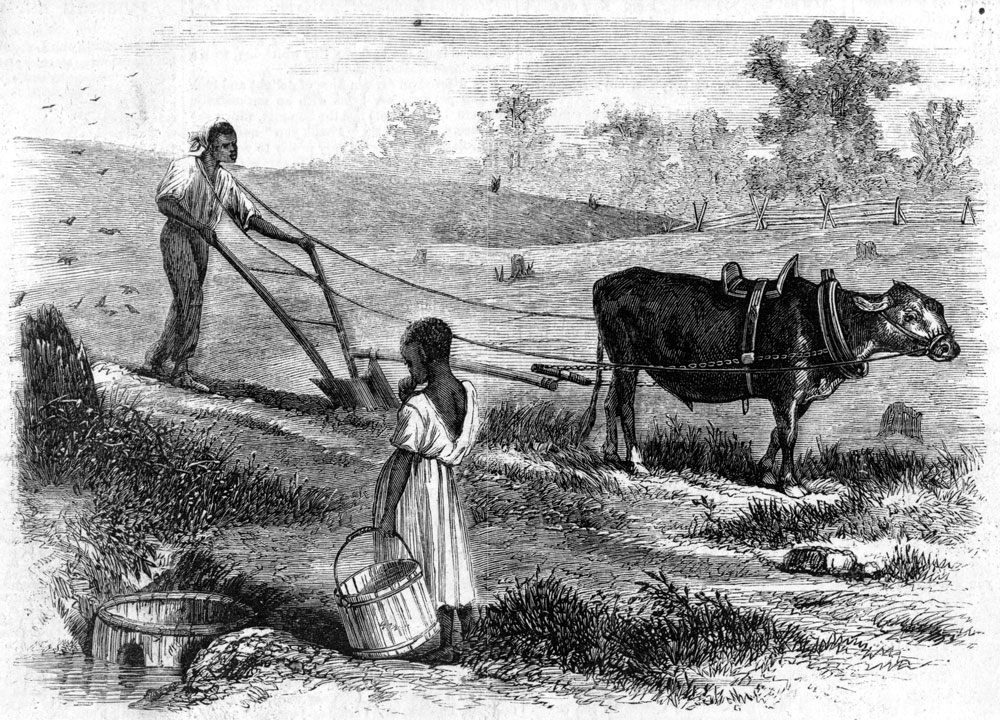A farmer plowing in South Carolina, 1866 | Zinn Education Project: Teaching People's History