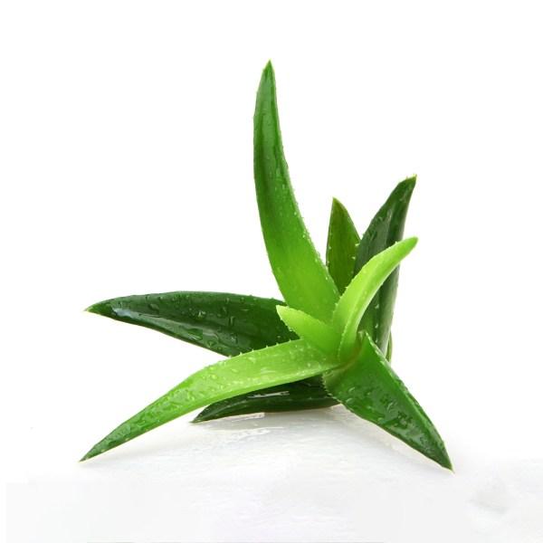 Aloe Vera geel 200 ml